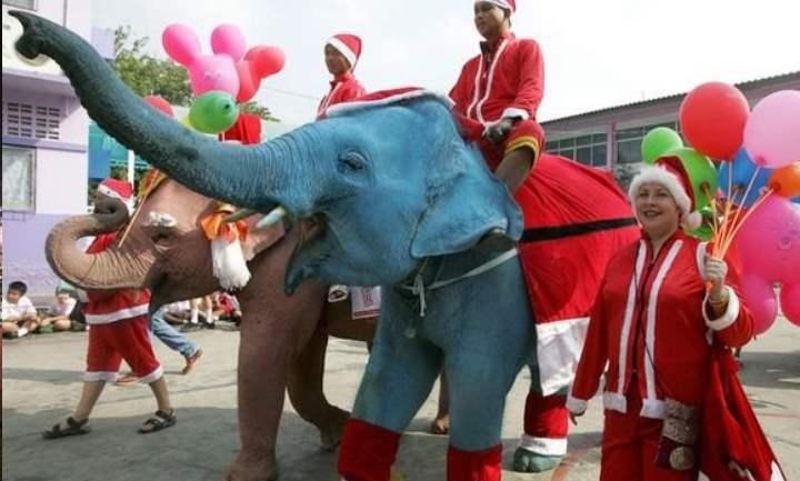 По улицам слона ведут