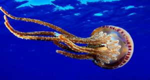 Красивое фото медузы