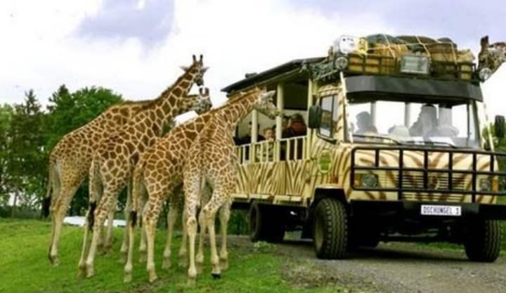 Сафари парк Safari World
