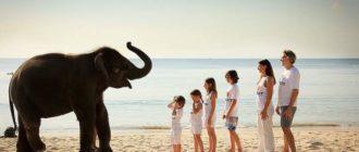 Фото со слонами