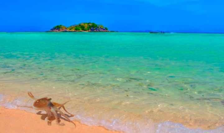 Какое море на Пхукете - ВСЯ ПРАВДА!