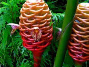 Этот очень чудной и крупный цветок очень часто встречается на фотографиях туристов