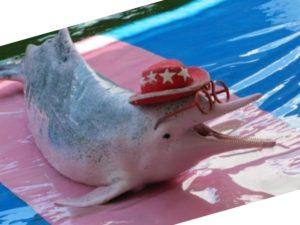 чаще всего видят розовых дельфинов часто ходят экскурсии как на катерах