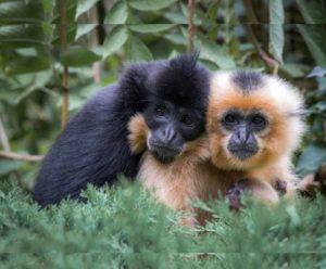 проживают в отдаленных районах джунглей